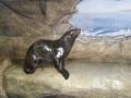 Пингвинарий в п. Лазаревское (Сочи)