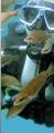 """Дайв-клуб """"Белый кит"""". Адрес: Краснодарский край, Геленджикский район,  Геленджик, ул. Луначарского, д. 133."""