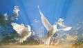 """МОУ """"СРЕДНЯЯ ОБЩЕОБРАЗОВАТЕЛЬНАЯ ШКОЛА №4"""". Адрес: Краснодарский край, Сочинский р-н,  Сочи, ул. Чехова 37."""