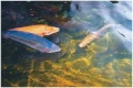 """ФГУ """"Чегемский форелевый рыбоводный завод"""". Адрес: Кабардино-Балкарская, Чегем,  , с. Яникой."""